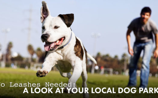 Local Dog Parks