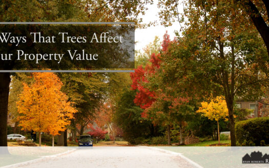 Ways That Trees Affect Your Property Value