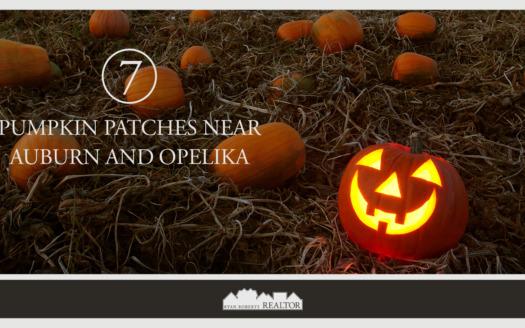 7 Pumpkin Patches Near Auburn and Opelika